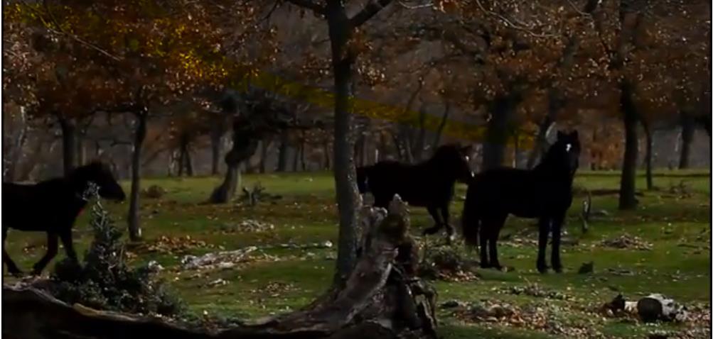 Seeking Wild Horses