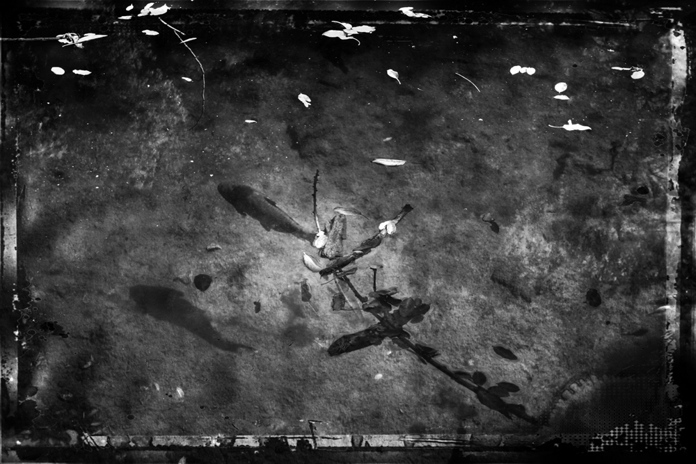 ethnikos_kipos_fish-10