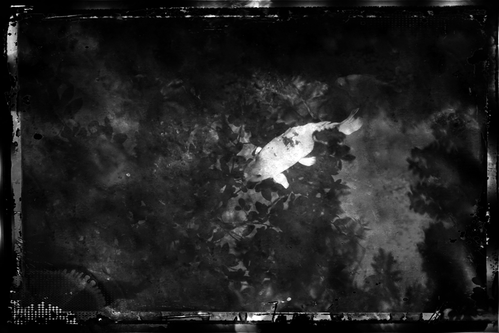 ethnikos_kipos_fish-15