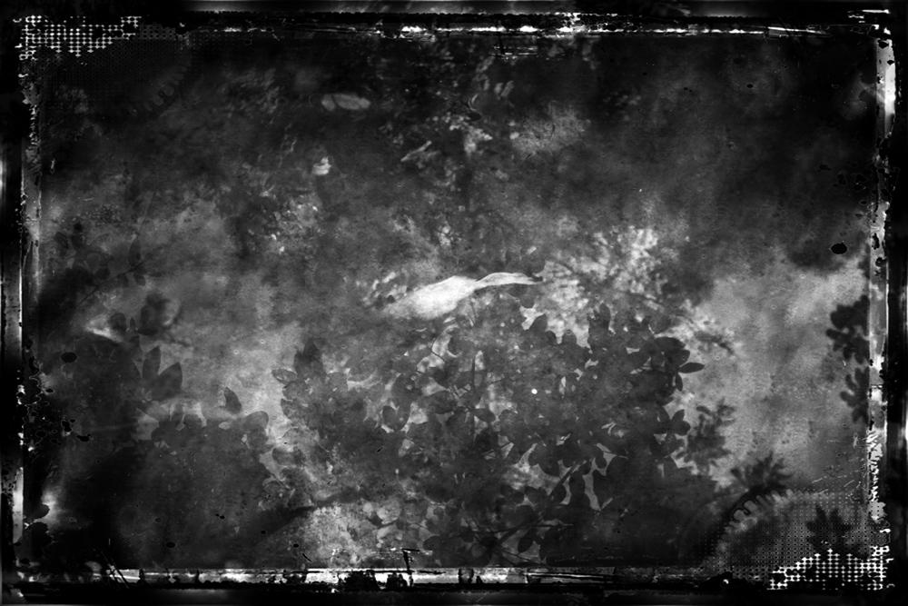 ethnikos_kipos_fish-21