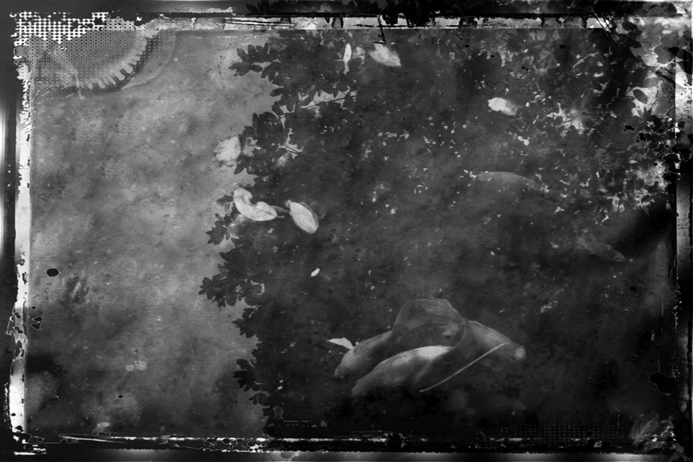 ethnikos_kipos_fish-22