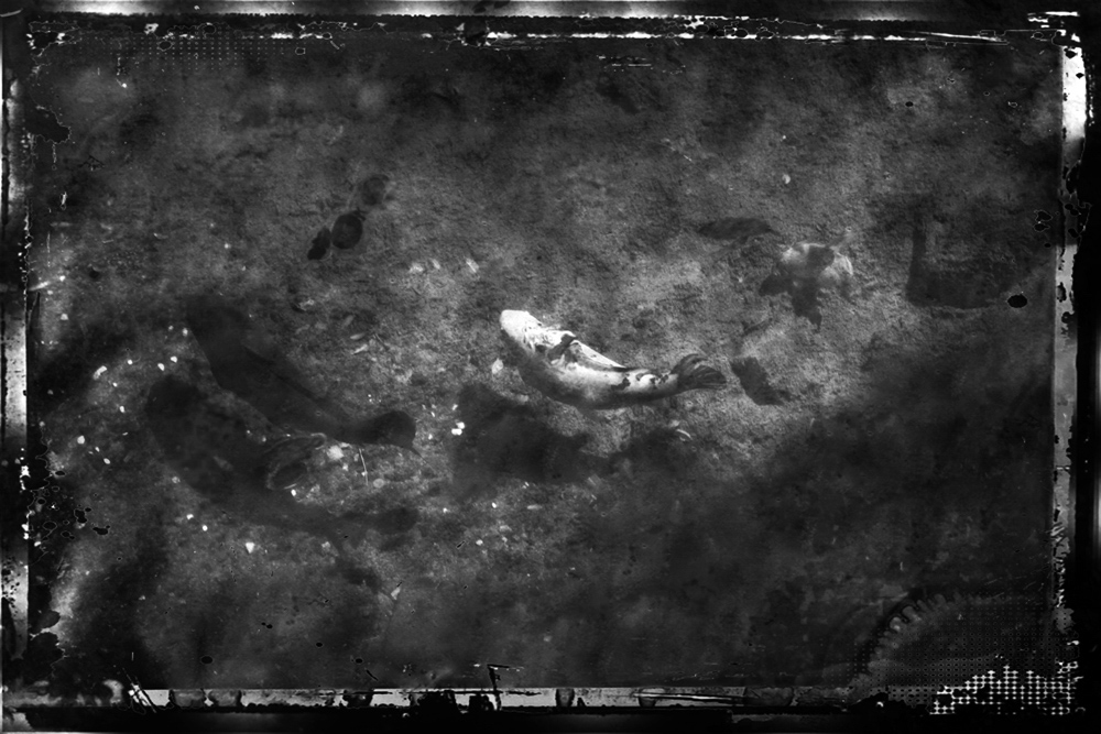 ethnikos_kipos_fish-9