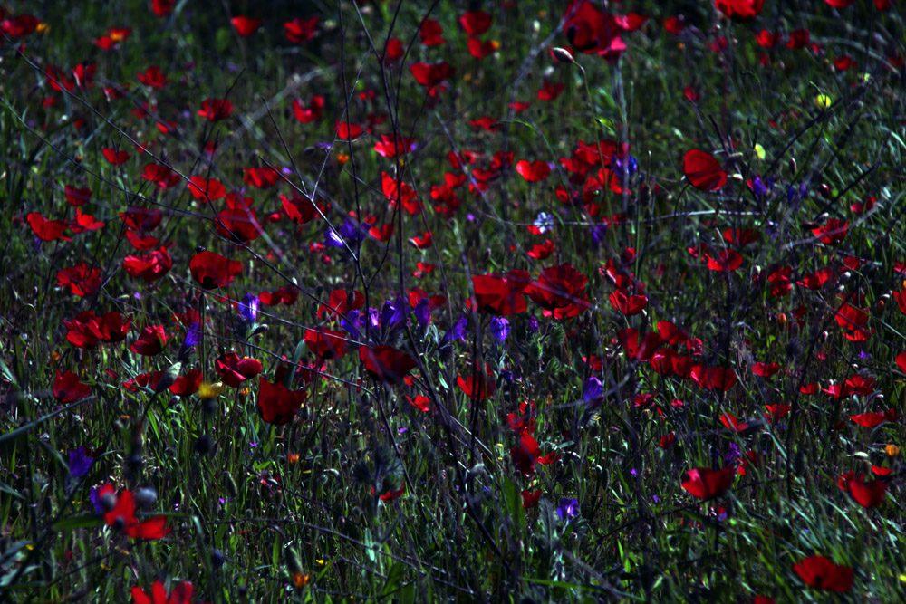 Πάσχα των Ελλήνων/φωτό: Σπύρος Τσακίρης